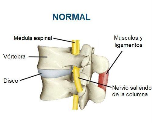 Articulación vertebral