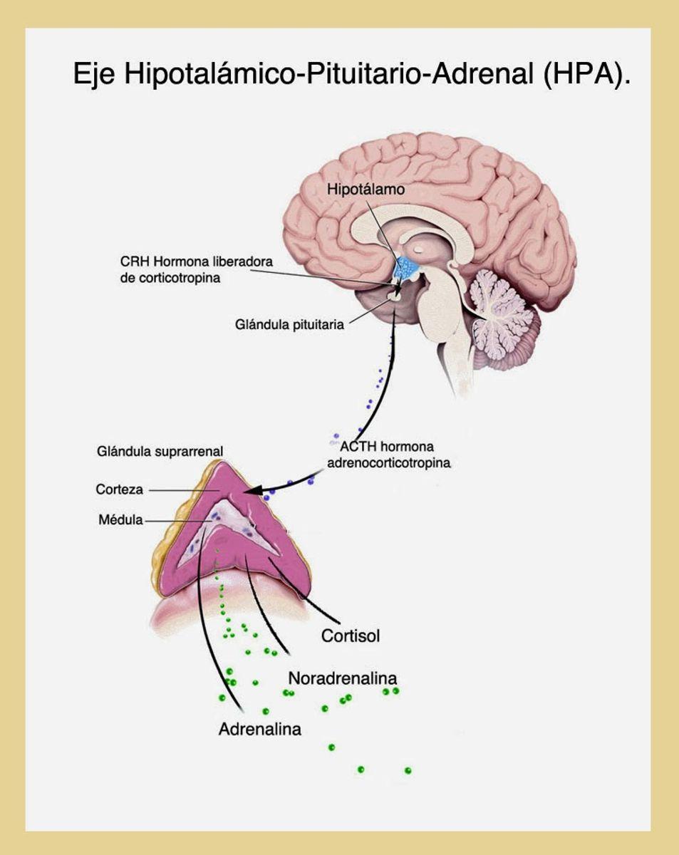 Quimica del estrés