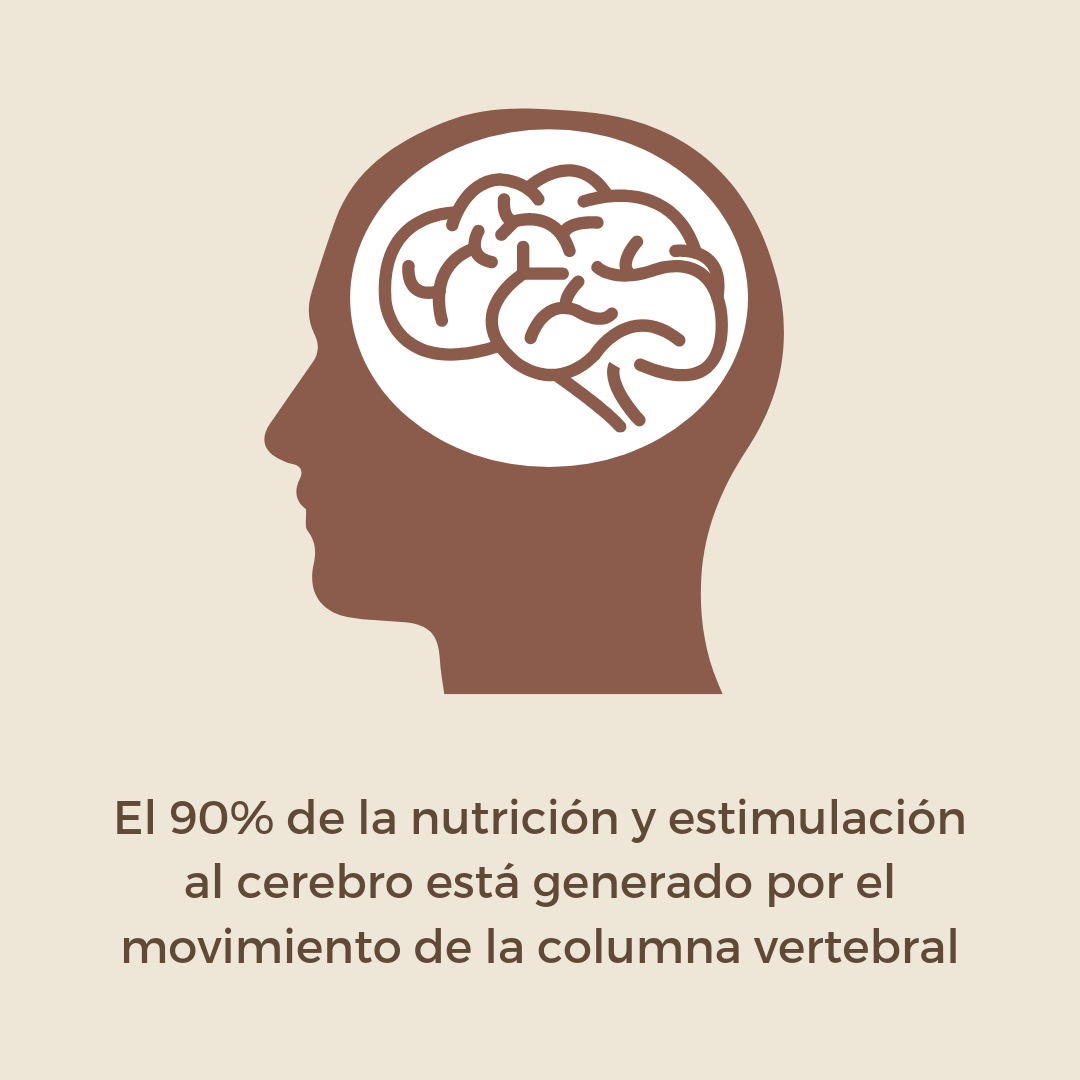 El Movimiento 90% de la actividad del cerebro